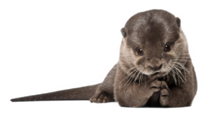 Otter PNG Transparent HD Photo PNG images