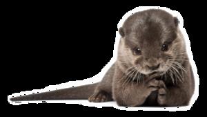 Otter PNG Transparent HD Photo PNG Clip art