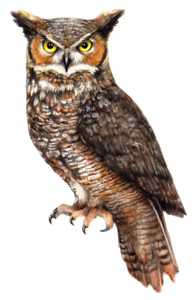 Owl PNG File PNG Clip art