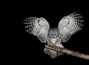 Owl PNG Photo PNG Clip art