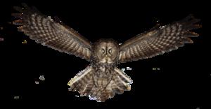 Owl PNG Photos PNG Clip art