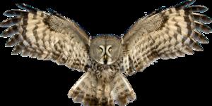 Owl PNG Pic PNG Clip art