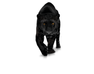 Panther Download PNG Image PNG Clip art
