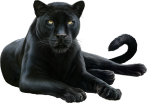 Panther PNG HD PNG Clip art