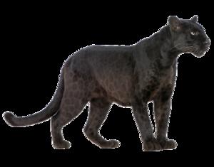 Panther PNG Transparent Image PNG Clip art