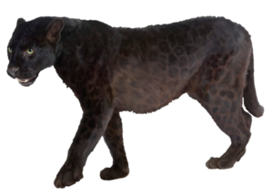 Panther PNG Transparent Picture PNG Clip art