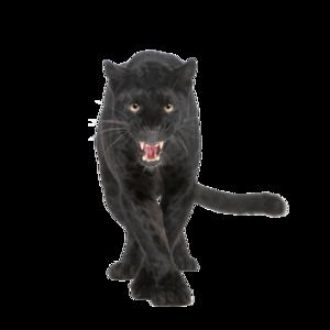 Panther PNG Transparent PNG Clip art