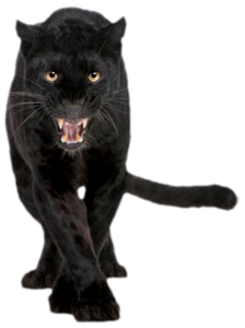 Panther Transparent PNG PNG clipart