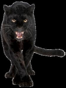 Panther Transparent PNG PNG Clip art
