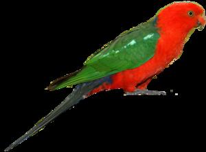 Parrot PNG Clipart PNG Clip art