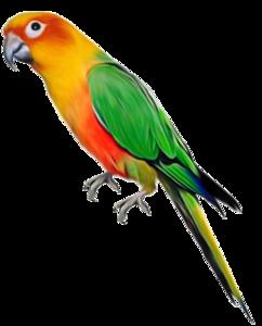 Parrot PNG File PNG Clip art
