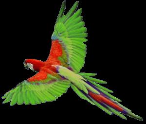 Parrot PNG Photos PNG Clip art