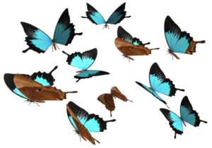 Peacock Royal Butterfly PNG Clip art