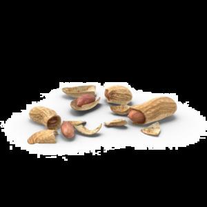 Peanut Download PNG Image PNG Clip art