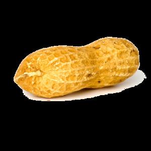Peanut PNG Background Image PNG Clip art