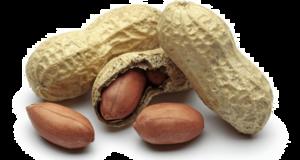 Peanut PNG Free Download PNG Clip art