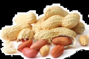 Peanut PNG Image PNG Clip art