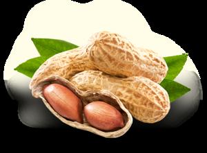 Peanut PNG Photo PNG Clip art