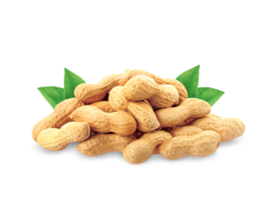 Peanut PNG Pic PNG Clip art