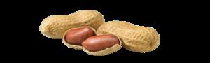 Peanut PNG Transparent PNG Clip art