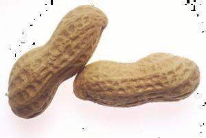 Peanut Transparent Images PNG PNG Clip art