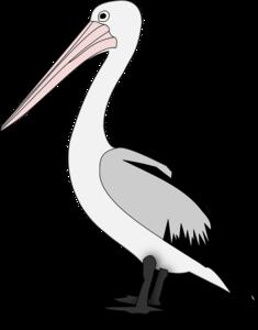 Pelican PNG Transparent PNG Clip art
