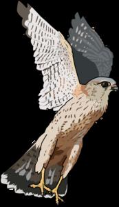 Peregrine Falcon PNG File PNG Clip art