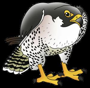 Peregrine Falcon PNG Free Download PNG Clip art