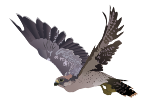 Peregrine Falcon PNG Image PNG icon