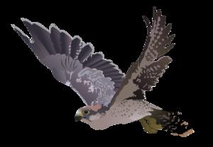 Peregrine Falcon PNG Image PNG Clip art