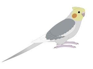 Peregrine Falcon PNG Picture PNG Clip art