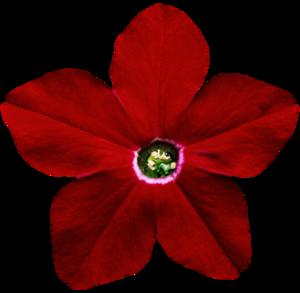 Petunia PNG Pic PNG Clip art