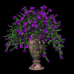 Petunia Transparent PNG PNG Clip art