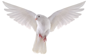 Pigeon PNG Clipart PNG Clip art