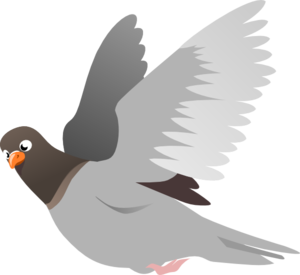 Pigeon PNG File PNG Clip art