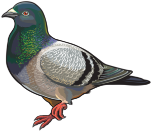 Pigeon PNG Photo PNG Clip art