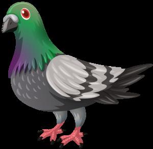 Pigeon PNG Transparent PNG Clip art