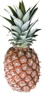 Pineapple PNG Image Free Download PNG Clip art