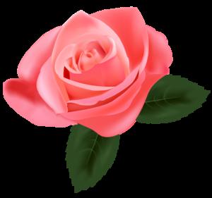 Pink Rose PNG Pic PNG Clip art