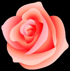 Pink Rose PNG Transparent PNG Clip art