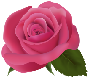 Pink Rose Transparent Background PNG Clip art