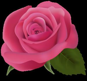 Pink Rose Transparent Background PNG Clip art