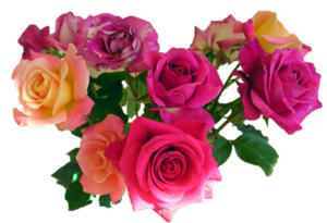 Pink Roses Flowers Bouquet PNG Image PNG Clip art