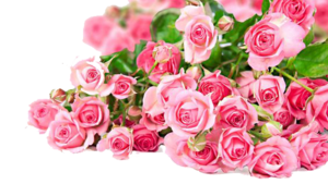 Pink Roses Flowers Bouquet PNG Photos PNG Clip art
