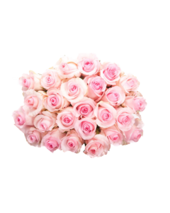 Pink Roses Flowers Bouquet PNG Pic PNG Clip art