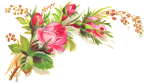 Pink Roses Flowers Bouquet Transparent Background PNG Clip art