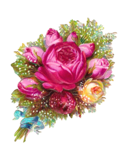 Pink Roses Flowers Bouquet Transparent PNG PNG Clip art