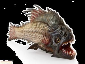 Piranha PNG Free Download PNG Clip art