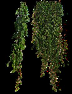 Plants PNG Clipart PNG Clip art