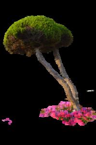 Plants PNG File PNG Clip art